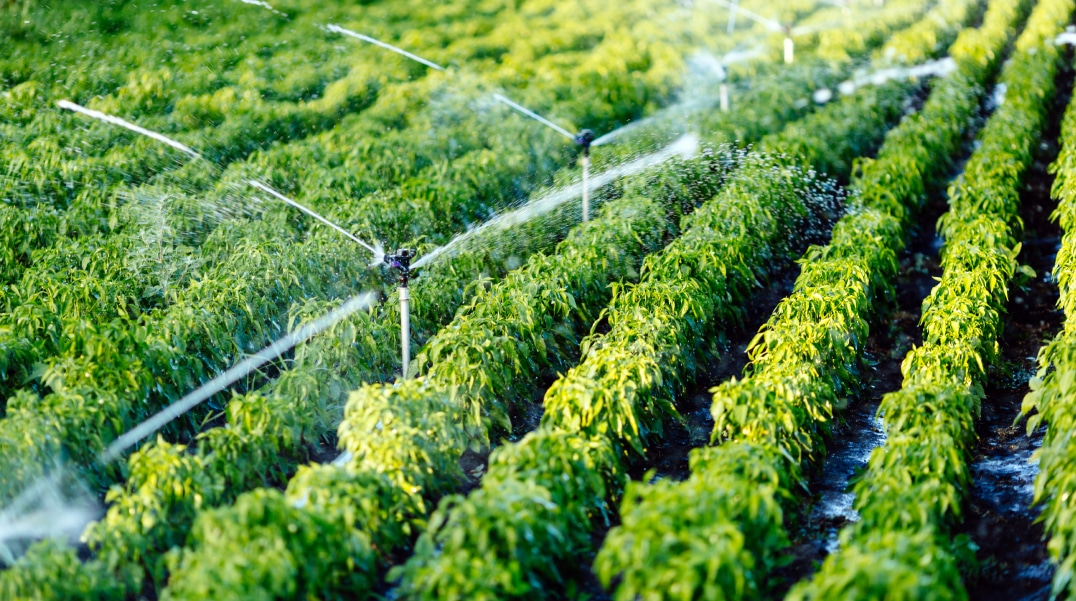 sustainable irrigation practices for water conservation