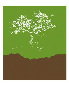 Crann Trees for Ireland logo
